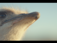 Samsung's ostrich ad scores awards aplenty at Cannes and beyond